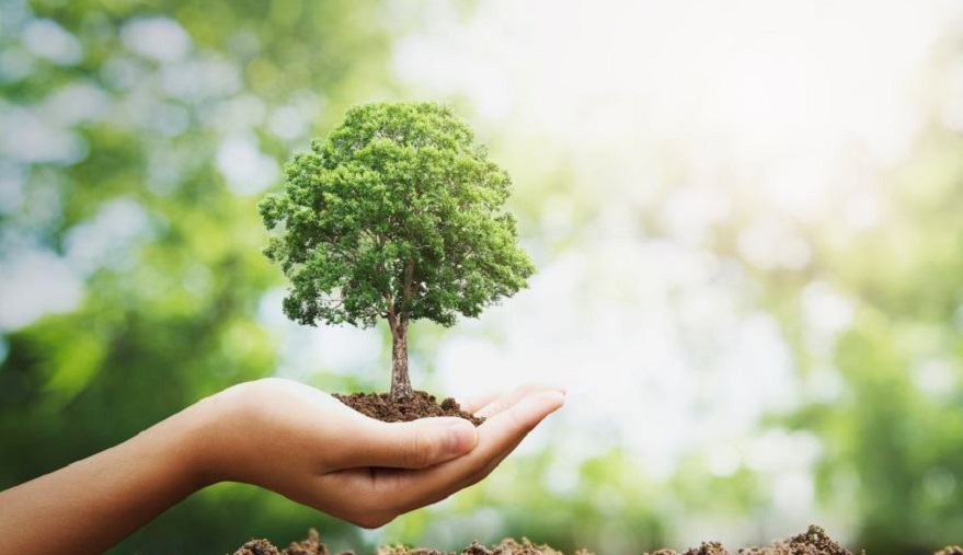 Qué es el Árbol de la Vida